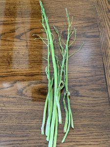 Homegrown asparagus
